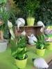 Frühjahrsmarkt 2013_3