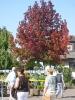 Treffpunkt Baumschule 2007_13