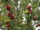 Apfelmarkt 2012_18
