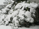 winterliche Impressionen_13