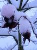 winterliche Impressionen_7