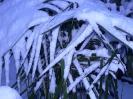 winterliche Impressionen_8